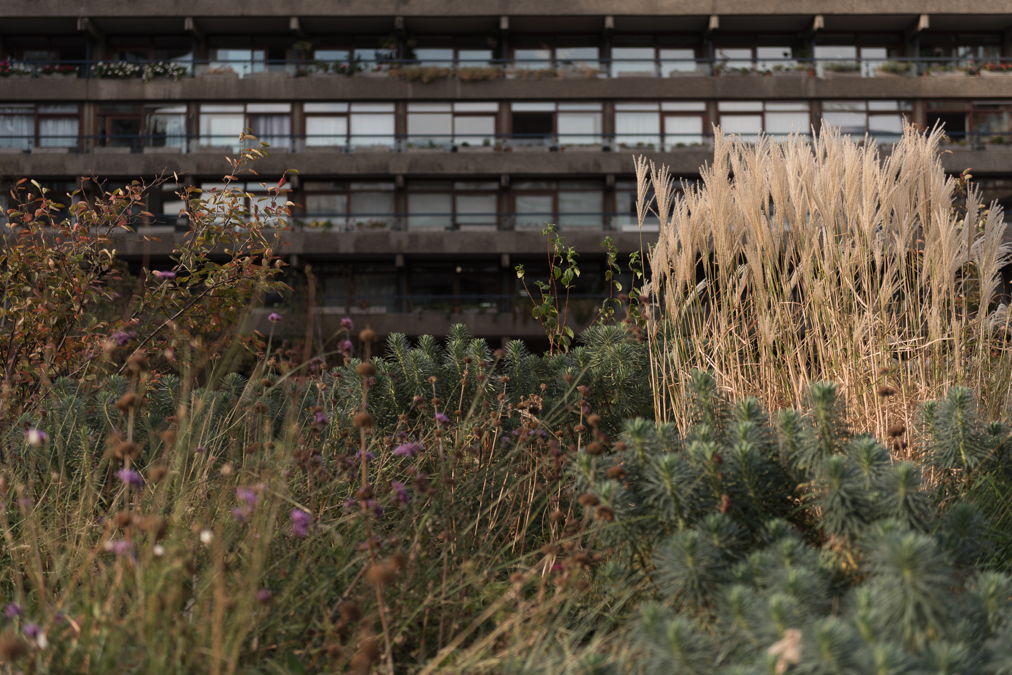 An image with ferns and grasses in the foreground and a tower block in the background.