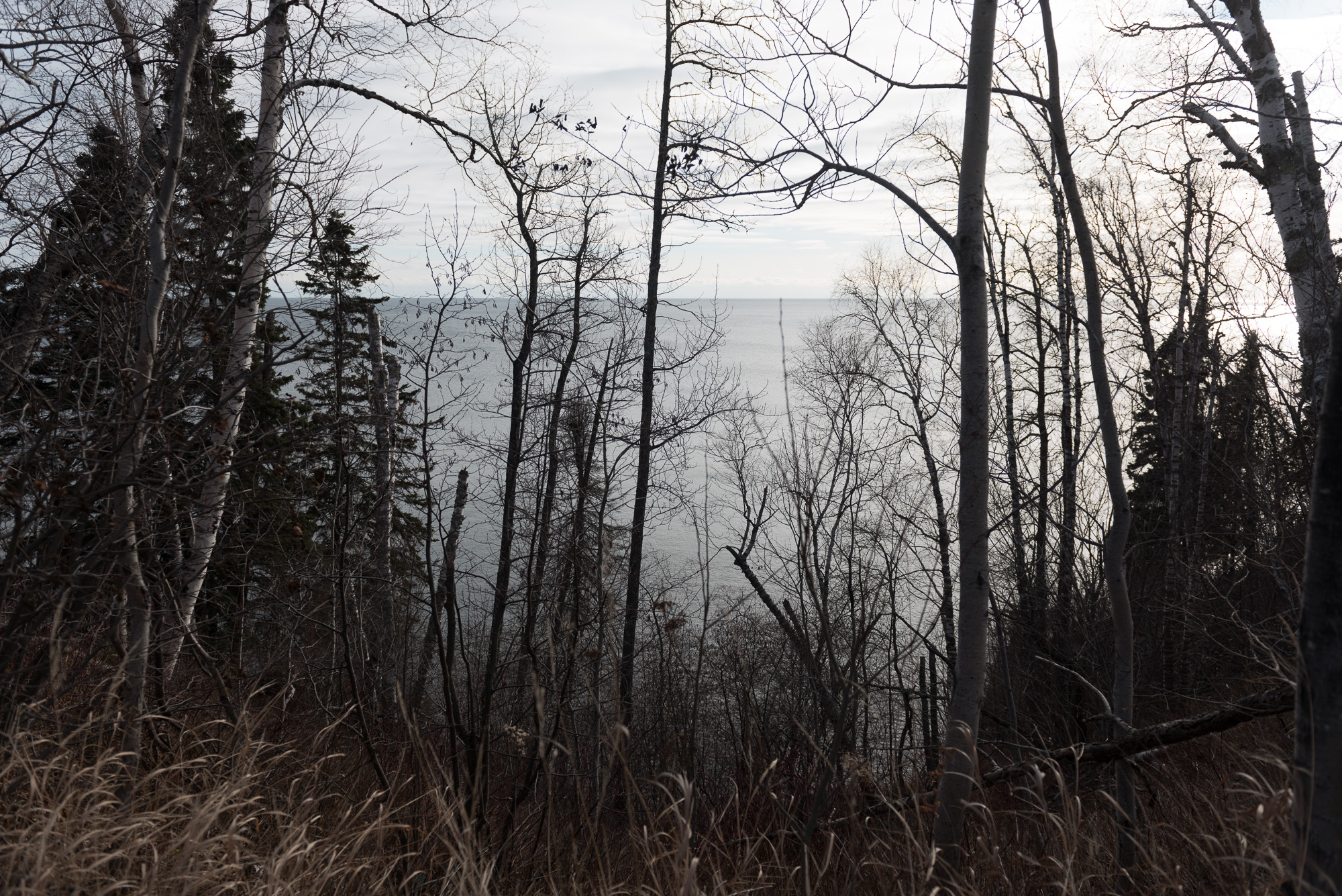 Looking through leaf-less trees and pines to Lake Superior