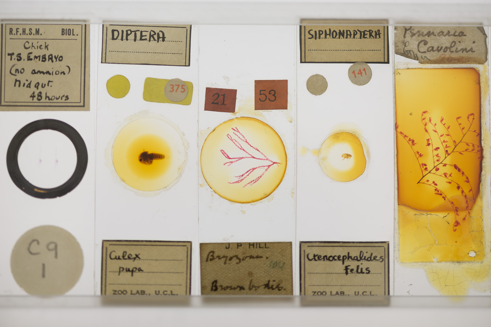 Five glass microscope slides filled with various specimens. They each have cream labels and handwritten notes.